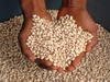 Cowpea Seeds Image