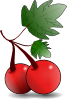 Cherries Fruit Clip Art