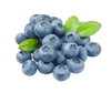 Blueberry Copy Image