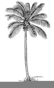 Clipart Palm Tree Black And White Image
