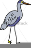 Heron Clipart Free Image