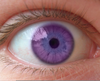 Natural Purple Eyes Image