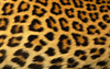 Leopard Print Background X Image