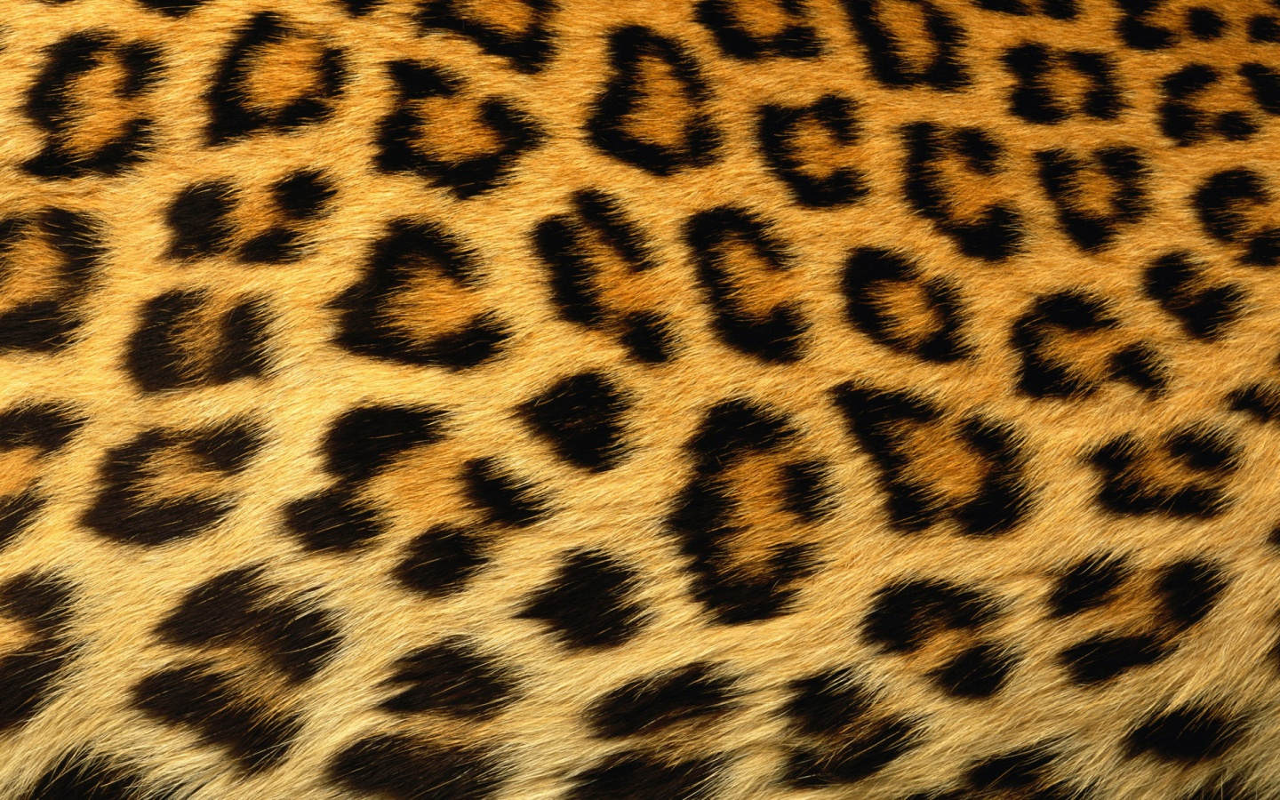 leopard print background x free images at