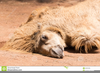 Camel Lying Down Clipart Image