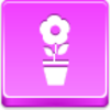Free Pink Button Pot Flower Image