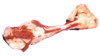 Bone Transparent Image