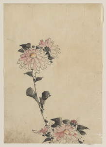 [pink Flower Blossoms On Low Stalk And Two On A Tall Stalk] Image