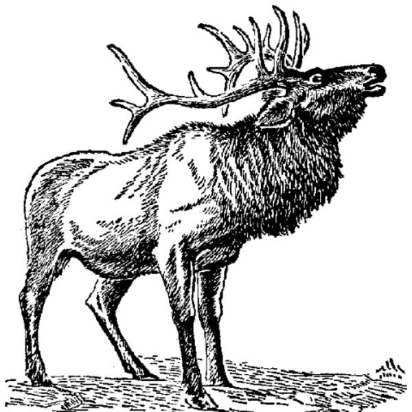 cow elk clipart - photo #50