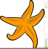 Clipart Of A Starfish Image