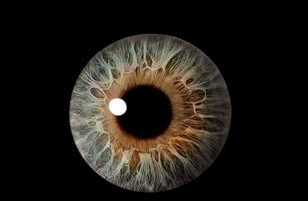 Eye Clip Art Vector Clip Art Online Royalty Free Public ...