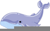 Humpback Whale Clipart Image