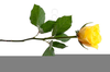 Single Yellow Rose Clipart Image