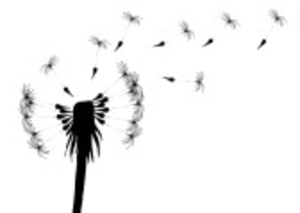 Vector Illustration Of Blowing Dandelion On A White Background Image