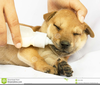 Puppy Love Clipart Free Image