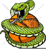 Viper Snake Clipart Images Image