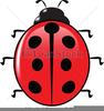 Free Clipart Ladybird Image