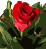 Single Rose Image