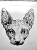 Sphynx Cat Drawing Image