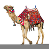 Clipart Of Camels Image