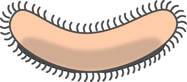 Bacteria shape1 clip art