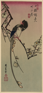 Plum Blossom And Magpie (long Tailed Cock Onagadori). Image
