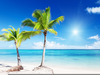 Palm Trees And Beaches Clipart Image