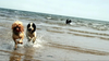 Dogs Holiday Image
