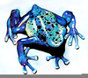Poison Frogs Drawings Image
