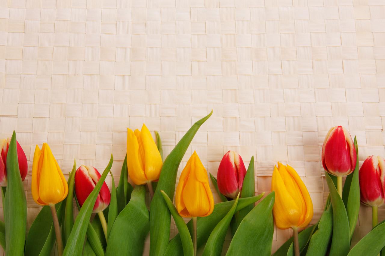 Tulip Border Qj | Free Images at Clker.com - vector clip ...