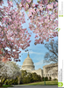 Free Clipart Us Capitol Building Image