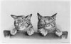 [two Kittens] Image