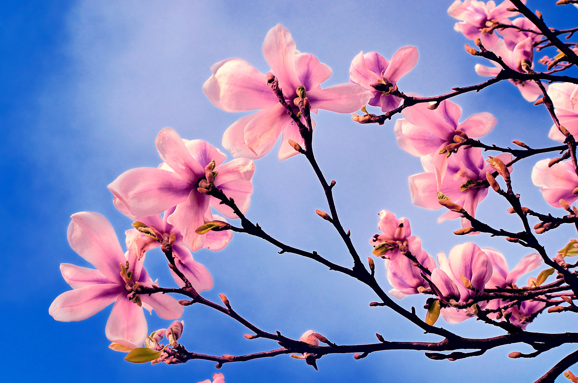 Tree Flowers In Spring Image Home Garden And Tree Rtecx