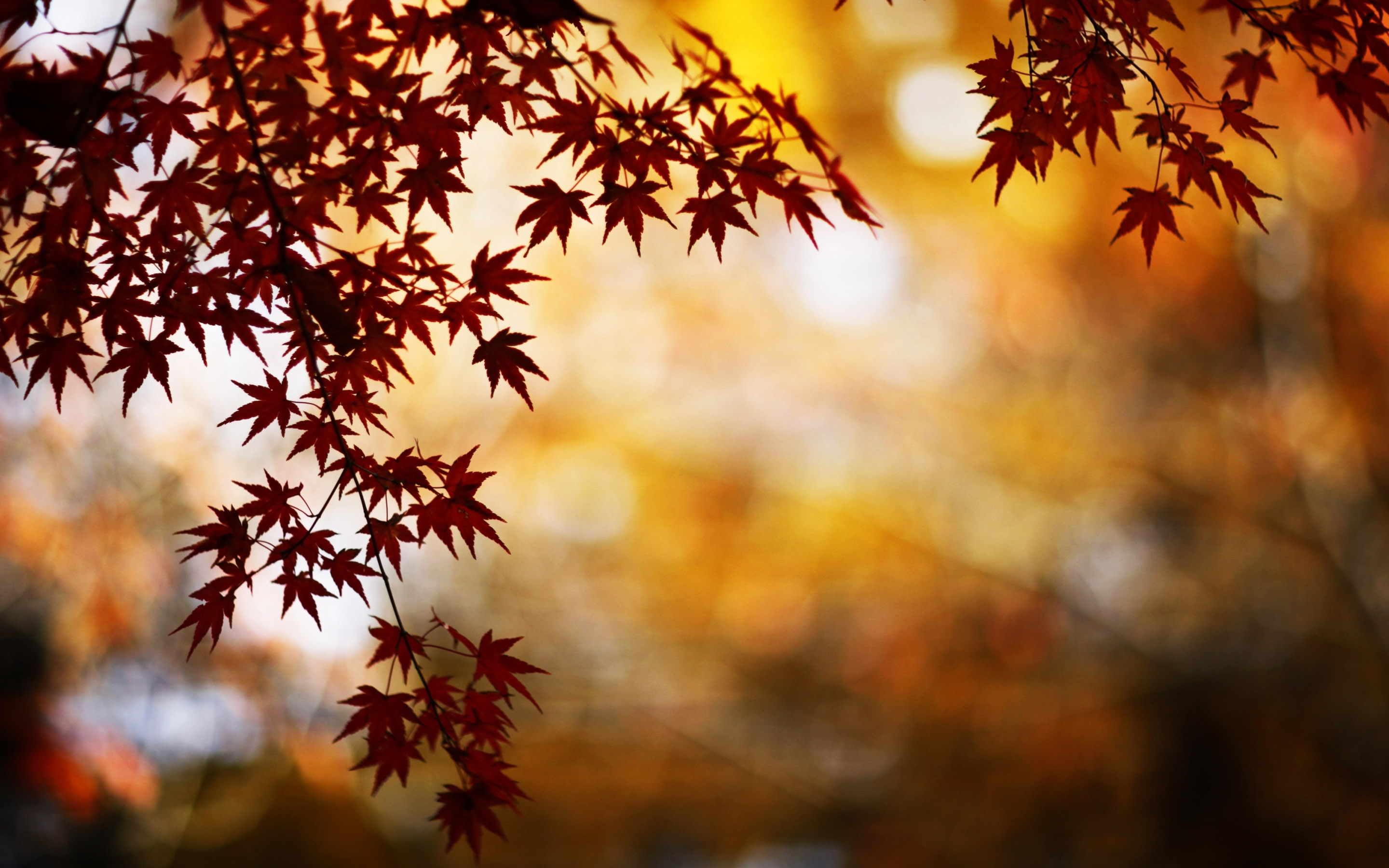 Red Foliage Bokeh Mac Wallpaper Download Free