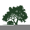 Clipart Live Oak Tree Silhouette Image