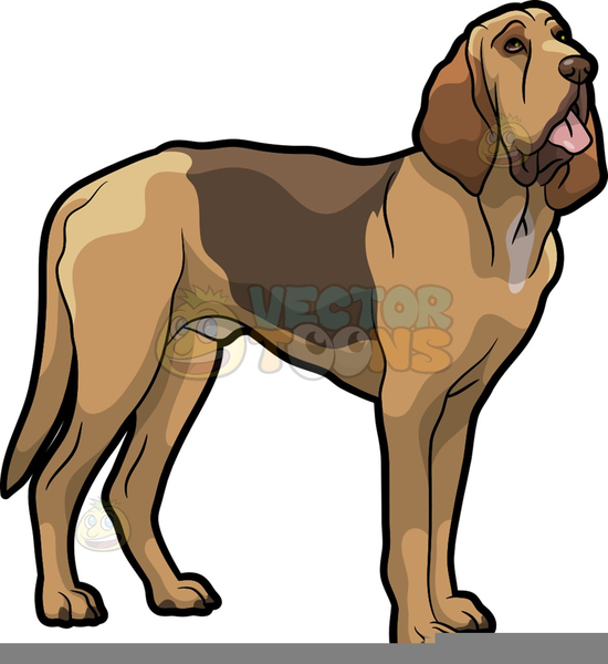 Bloodhound Dog Clip Art - Royalty Free - GoGraph