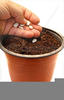 Planting Seeds Clipart Image