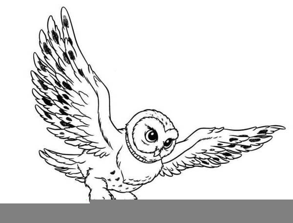 Barn Owl Clipart Free Images At Clker Com