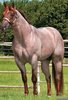 Red Roan Horse Image