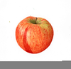 Apple Botanical Illustration Image