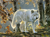 Forest Animals Images Image