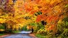 Colorful Autumn Road Trees Park X Image
