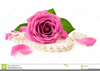 Pearl Rose Clipart Image
