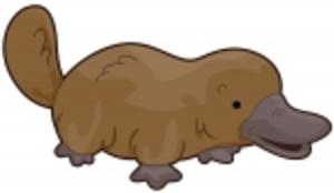 platypus free images at clker com vector clip art online rh clker com platypus clipart duck billed platypus clipart