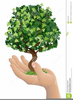 Growing Tree Clipart Image