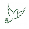 Flying Dove Clipart Image