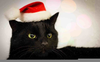 Cat Christmas Clipart Image