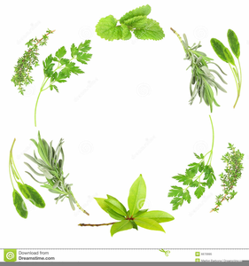 herbs online