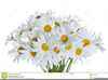 Free Daisy Clipart Images Image
