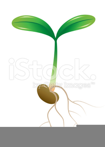 Sprouting Seed Clipart Image